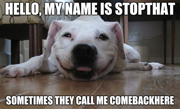 hello my name is stop that dog meme