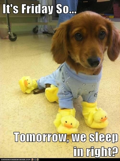 its friday so tomorrow we sleep in right dog meme
