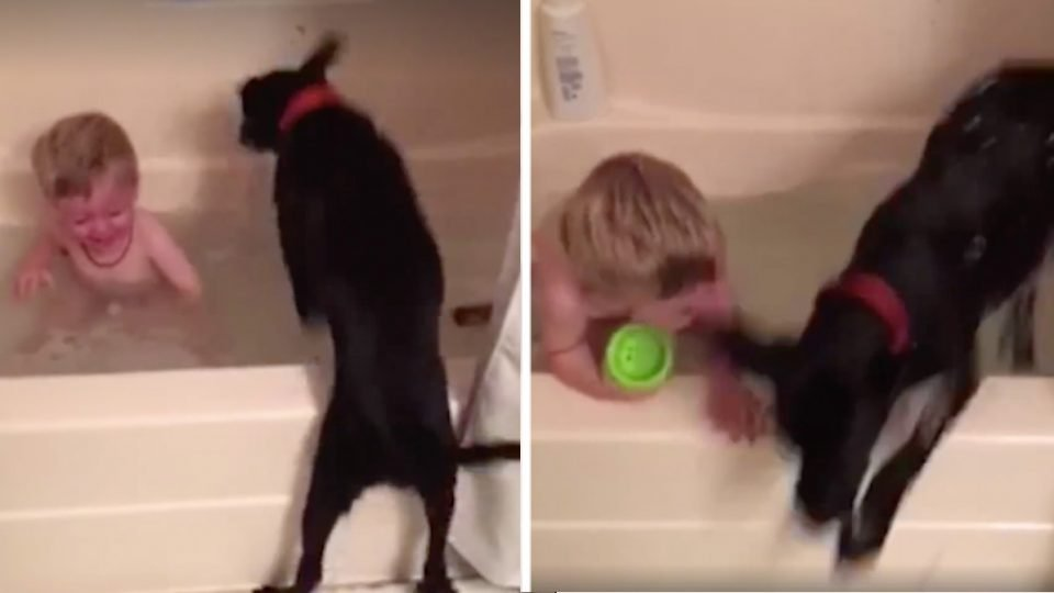 joyful labrador hops in and out of bathtub with kid HERO