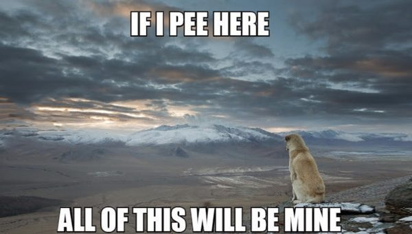 shower thoughts deep dog thoughts HERO