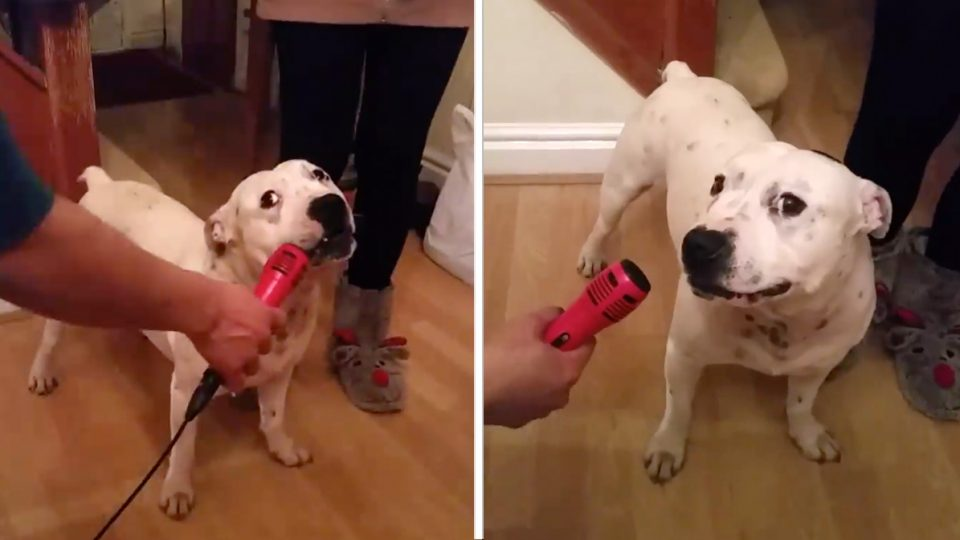 shy karaoke dog is all of us HERO