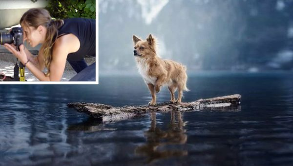 8 tips from professional dog photographer Anne Geier HERO