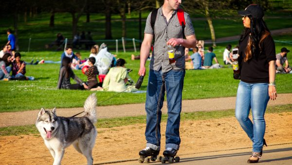 The Top 10 Dog Parks in London