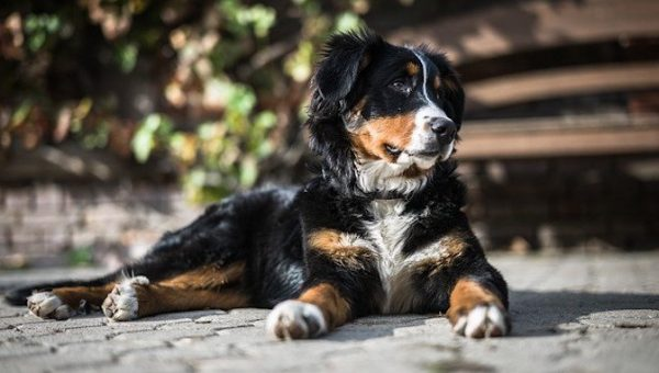 "87 Best Dog Names that Mean ""Strong"" for 2019"