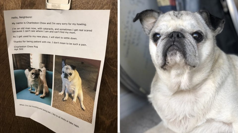 charleston chew howling pug viral HERO