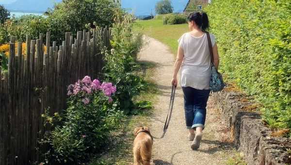 Why We Walk: A Trainer's Perspective on Daily Walks for Dogs
