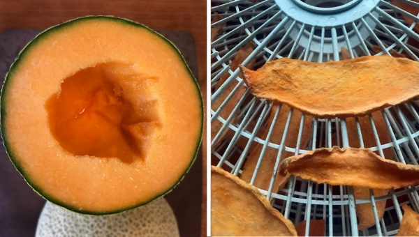 Dehydrated Cantaloupe Chews for Dogs Are an Easy Summer Treat