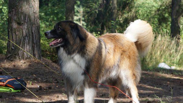 5 Best Dog-Friendly Campgrounds Near Portland