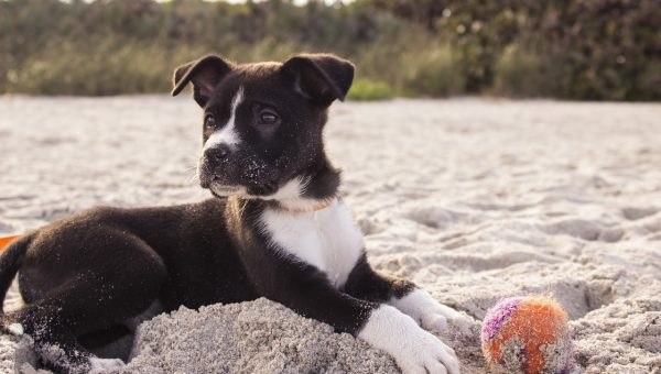 Top Dog Beach Near Asbury