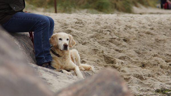 Top Dog Beach in Bonita Springs