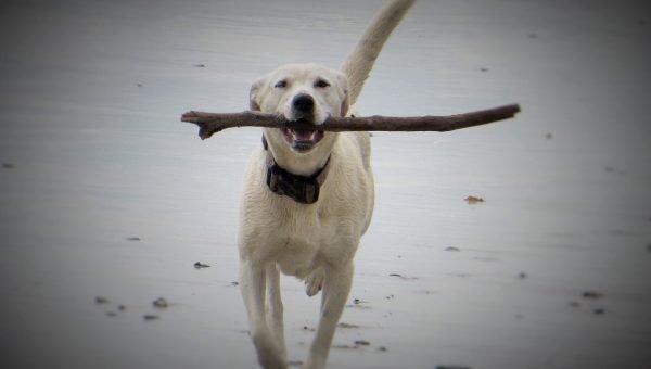 Top 3 Dog Beaches in Myrtle Beach