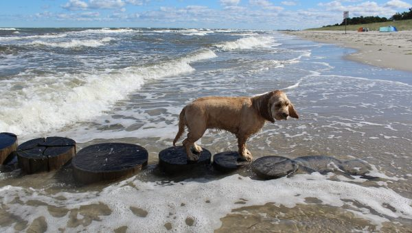 Top 3 Dog Beaches in Evanston