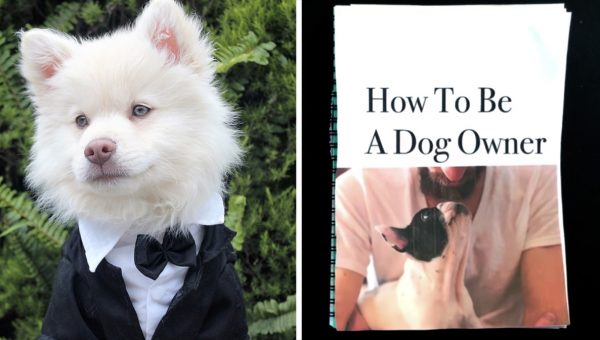 Tongue-in-Cheek 'How to Be a Dog Owner' Video Goes Viral