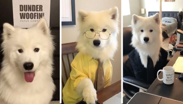 Dog Perfectly Recreates Intro to 'The Office' in Viral Video
