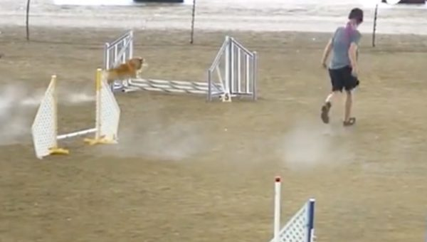 This Corgi Athlete Is 2 Fast 2 Furious in Hugely Popular Video