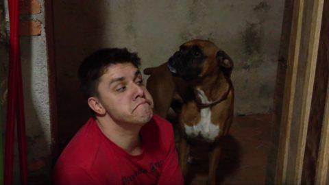 guy imitates boxer dog hilarity ensues HERO