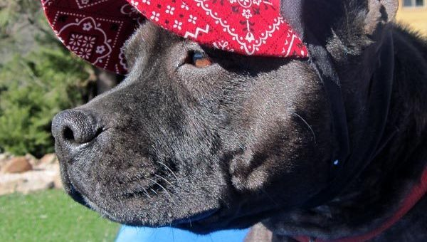 The 6 Best Dog Hats and Dog Visors for the Sunbound Pup