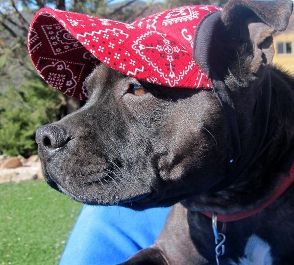 3b2a2e6674c The 6 Best Dog Hats and Dog Visors for the Sunbound Pup