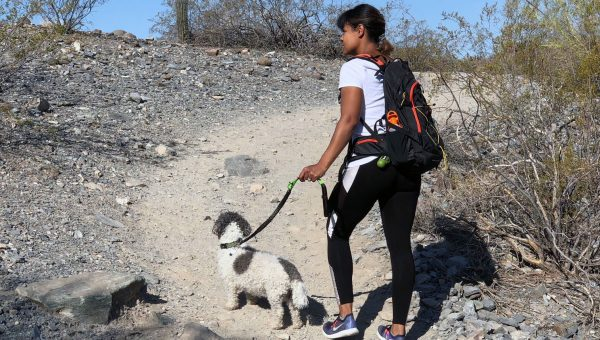 How to Enjoy Hot Weather Hiking with Dogs