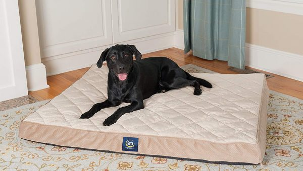 5 Best Dog Beds for Labs of All Ages