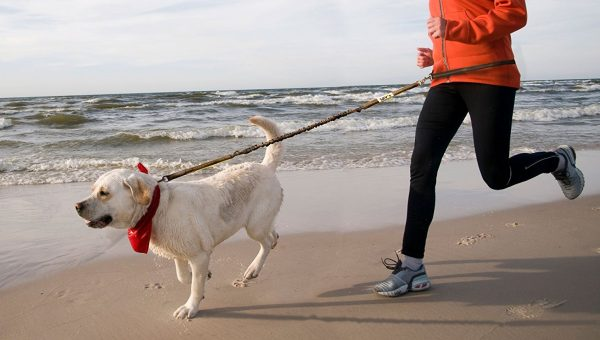 Top 5 Leashes for Labs