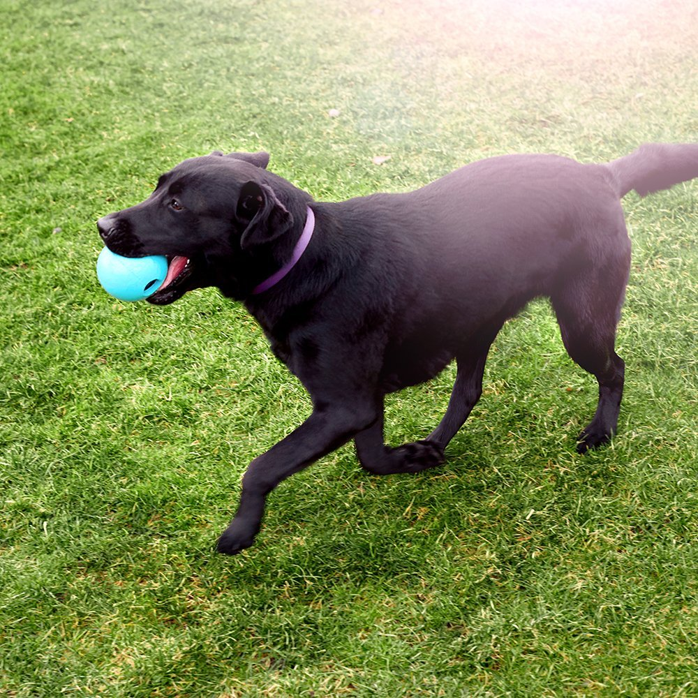 Dog Toys For Big Dogs That Chew Vamazon