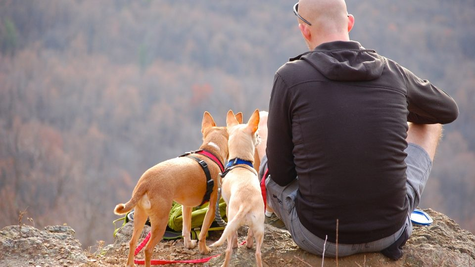 camping with dogs sitting on a lookout with three dogs outdoors
