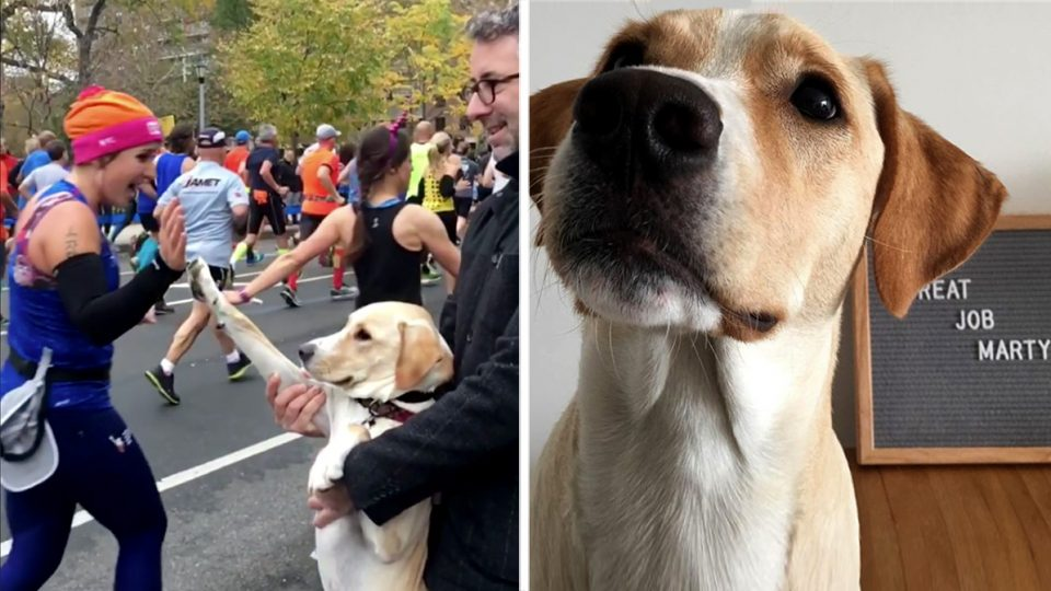 Nyc Training Rescue Dogs
