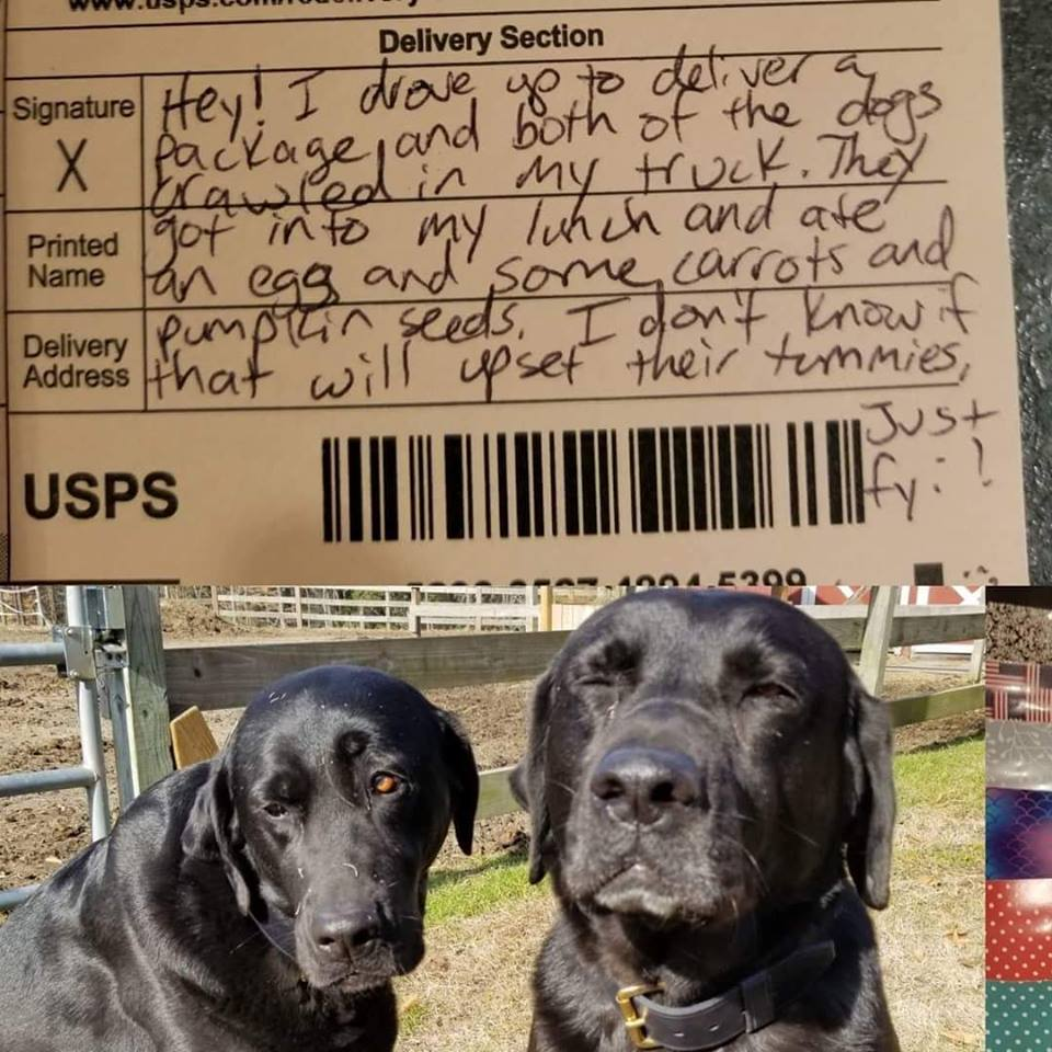 Cutest Thieves Ever Apologize for Stealing Lunch