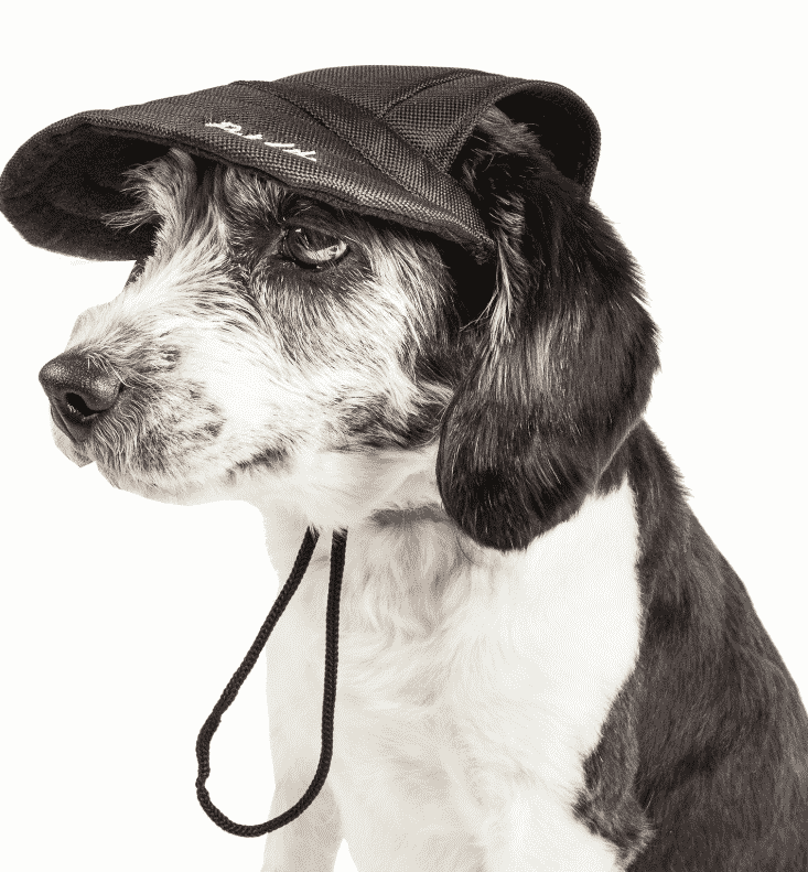 hats for dogs with cropped ears