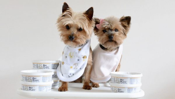 This Company Will Cook Your Dog's Food and Deliver It to Your Door