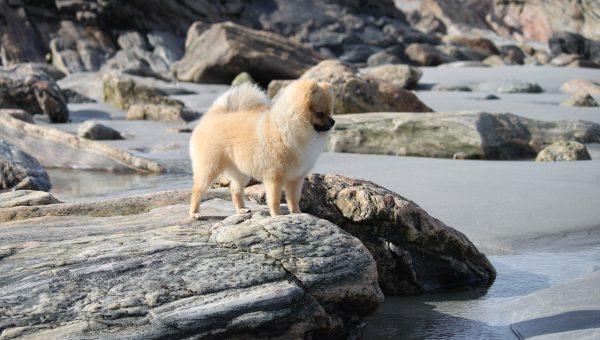 Top 6 Dog Beaches Near Larchmont
