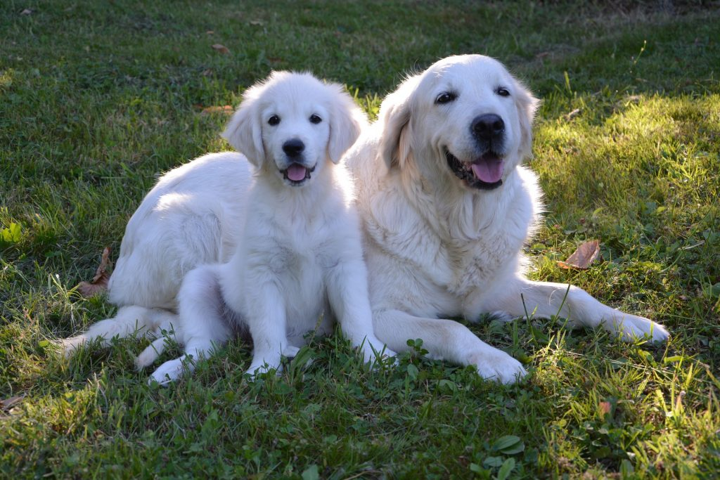 When Do Puppies Stop Growing The Dog People By Rover Com