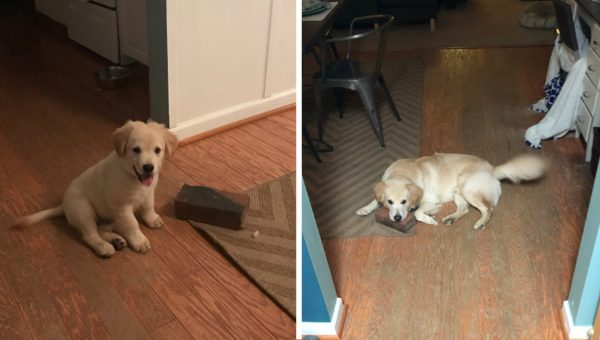 rescue dog best friend brick HERO