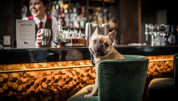 Top 5 Dog-Friendly Restaurants & Cafes in London