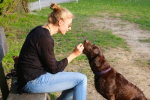 A college student sits and gives a treat to the dog she is sitting.