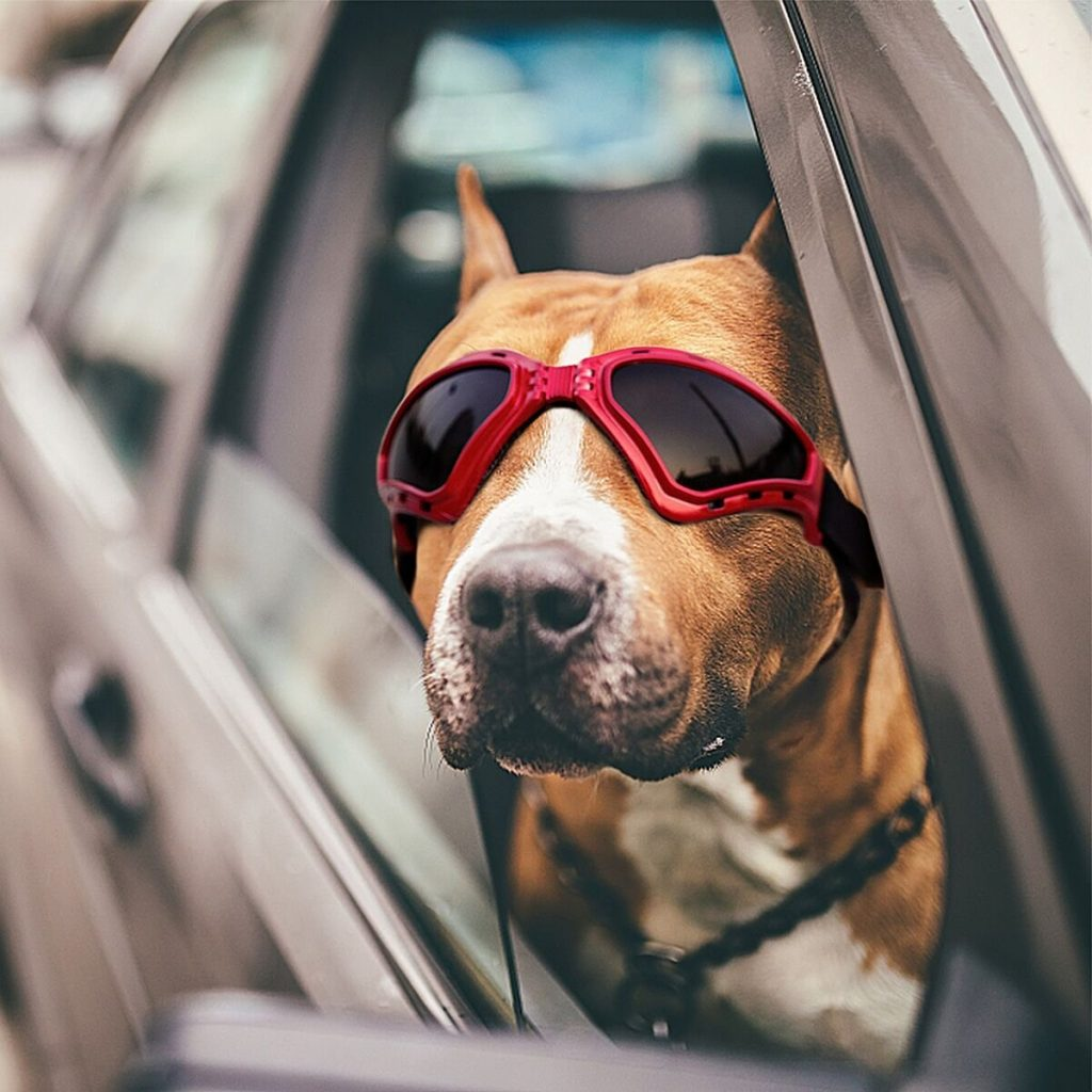 Dog Sunglasses The Very Best Dog Goggles And Sunglasses
