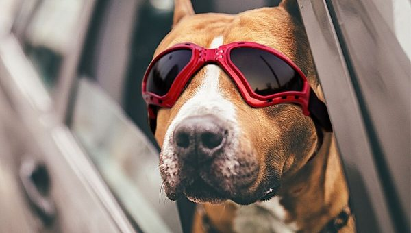 The Best Dog Sunglasses of 2018 from Practical to Fashionable