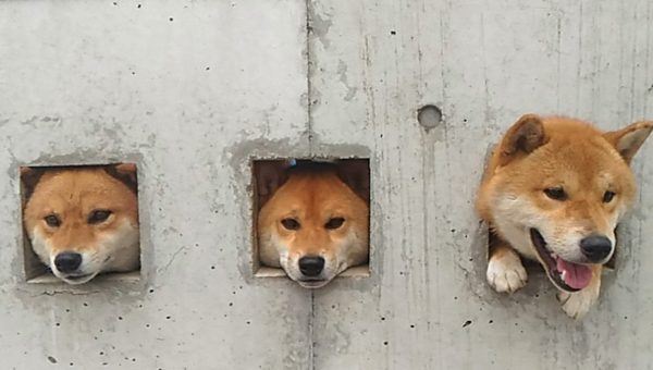 The Adorable True Story Behind the Second-Most Popular Dog Landmark in Japan