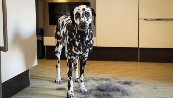 Dog Sneezing: When to Be Concerned and What to Watch for | The Dog