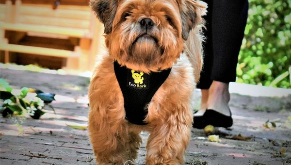 best shih tzu harness