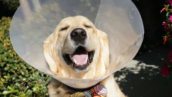 8 Adorable Dogs Turn the Cone of Shame into the Cone of Fame