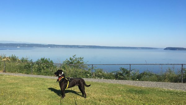 Dog Bed to 5K: What You Need to Run with Your Dog