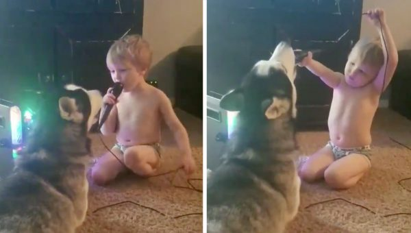 This Husky Went Viral for Singing a Karaoke Duet with a Toddler
