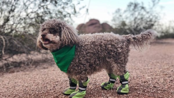 best dog boots for hiking