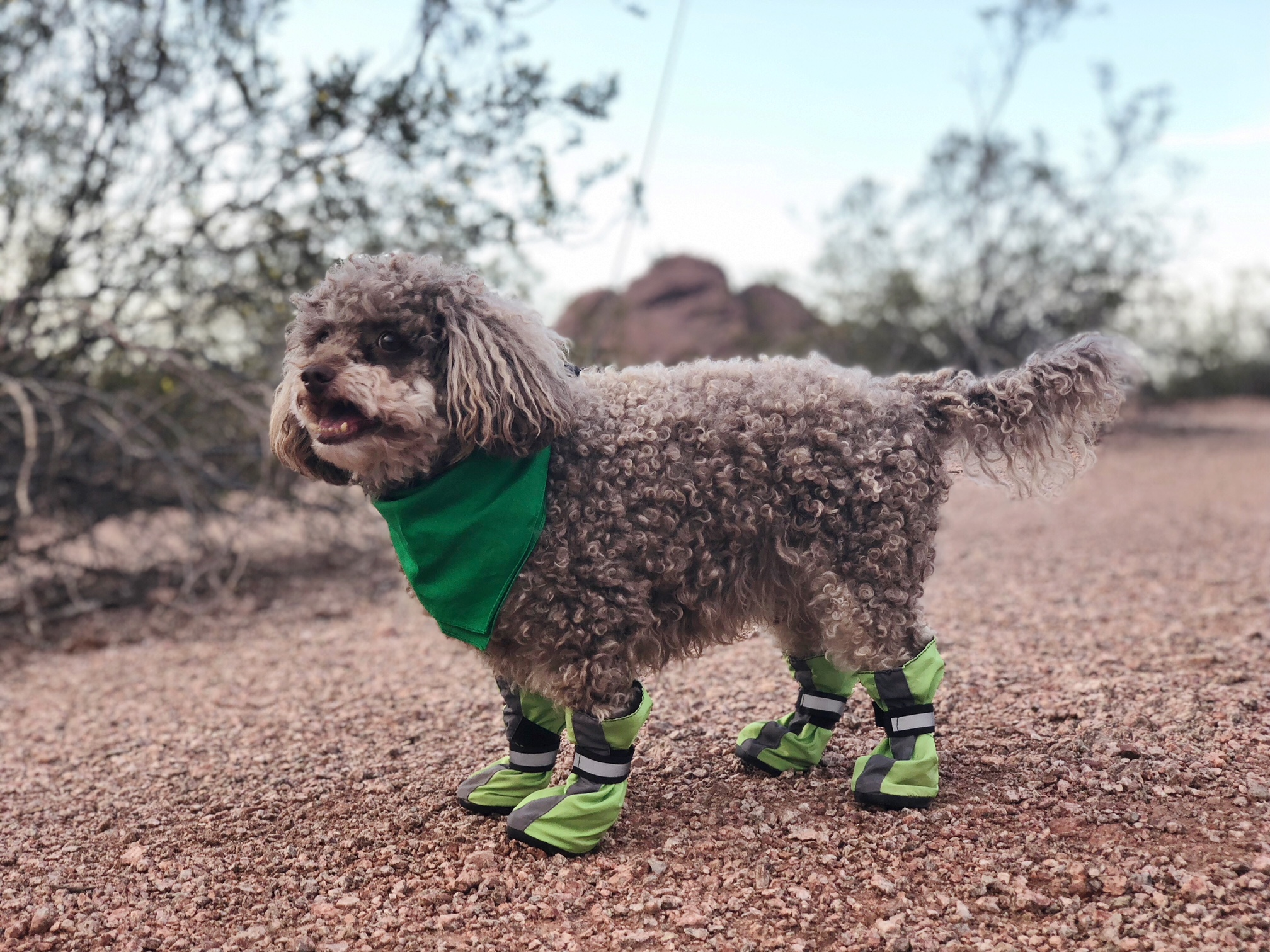 0f6c3229615 The Best Dog Hiking Boots for All Breeds and Sizes | The Dog People ...