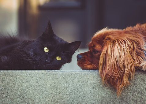 dog vs cat intelligence