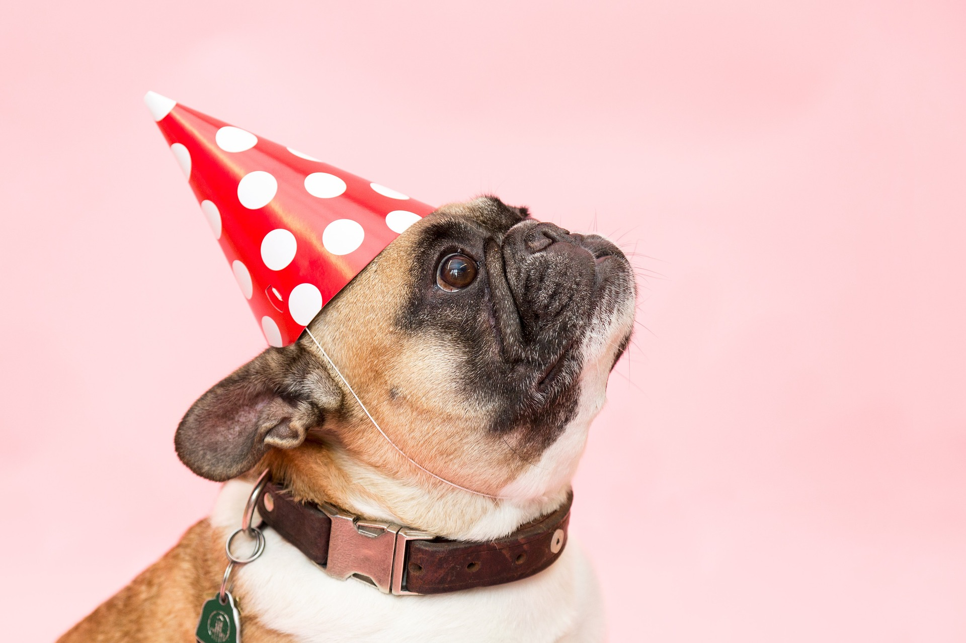 dog birthday parties  ultimate guide    pup