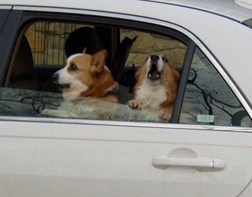 chiens qui aboient dans une voiture