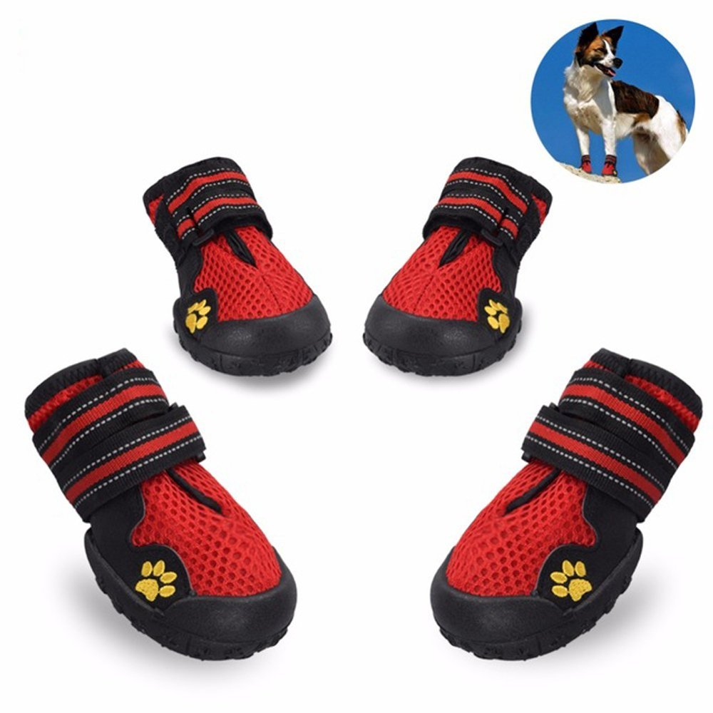 Dog Shoes Running Pavement